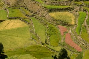 upper-dolpo-trekking-agriculture-rice
