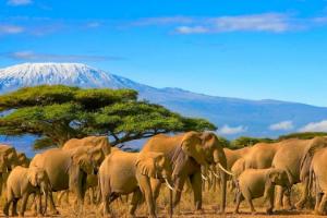 northern-circuit-itinerary-and-route-map-kilimanjaro-trekking-hiking