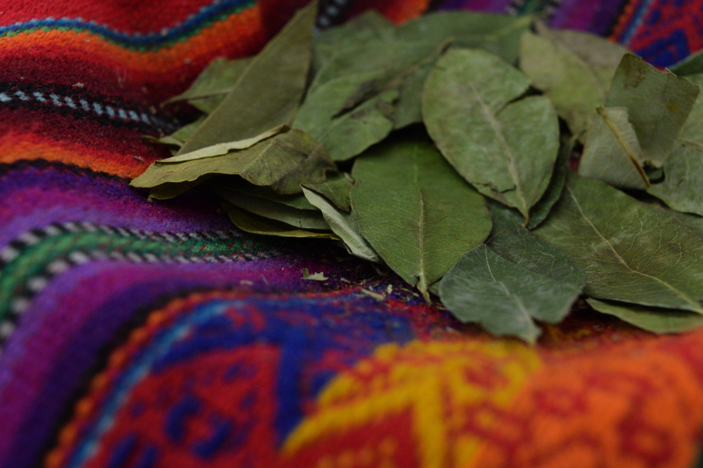 salkantay-trek-coca-leaves