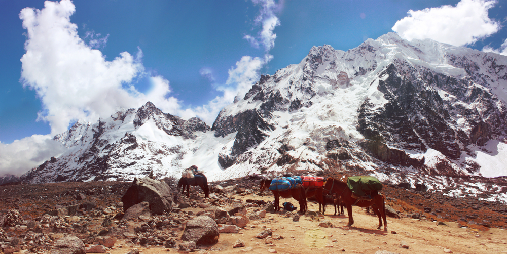 salkantay-trek-donkeys